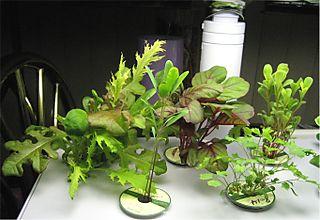 SaladBar20080902
