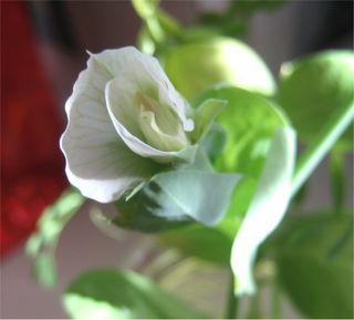 FlowerOnCutting
