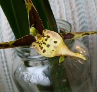 OrchidBLOG